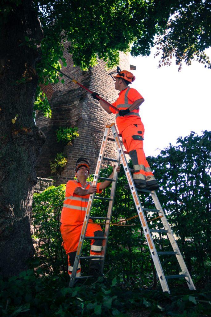 Baumpflegerische Maßnahmen Parkplatz Schützenstraße
